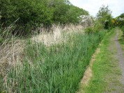 The Hadrians Wall Path Nearing Port Carlisle